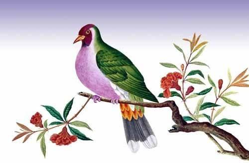 tiermalereien - Pajaro sobre una rama - _Anonym China