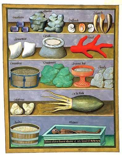 bilder-fuer-ein-esszimmer - Libro de las medicinas sencillas 1 - Platearius, Matthaeus