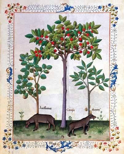 bilder-fuer-ein-esszimmer - Libro de las medicinas sencillas 3 - Platearius, Matthaeus
