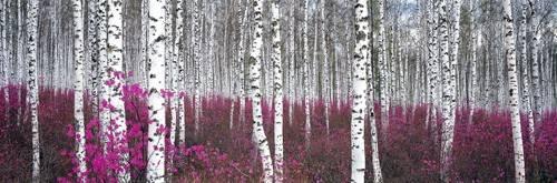 bilderrahmen - CUGAT-54 - Naturaleza, Fotografia de