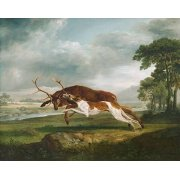 Hound Coursing a Stag- (caza)