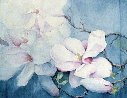 blumen-und-pflanzen - Magnolia Soulangeana (horizl) - Armitage, Karen