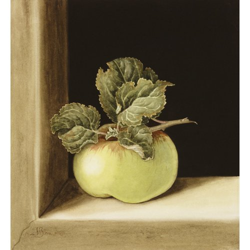 Apple (w.c on paper)