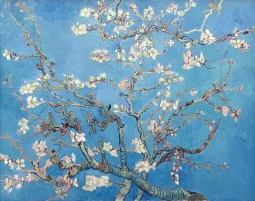blumen-und-pflanzen - Mandelbaum in Blüte (Mandelblüte) - Van Gogh, Vincent