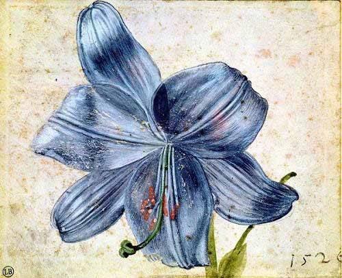 blumen-und-pflanzen - Estudio de una lila - Dürer, Albrecht (Albert Durer)