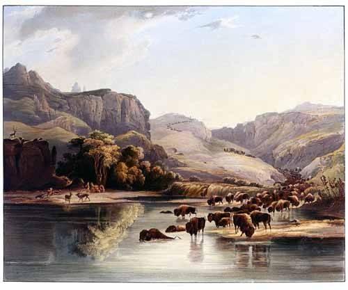 alte-karten-und-zeichnungen - Manadas de bisontes y alces - Bodmer, Charles